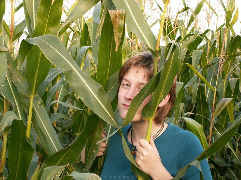 Цыпочка трахает себя кочаном на кукурузном поле